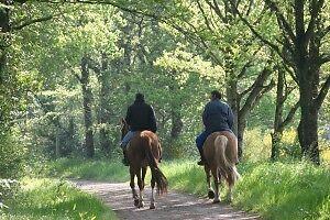 Recherche vieux cheval en santé