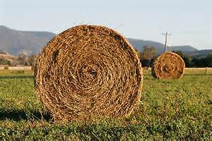 Looking for Round Bales or Large Square of Hay (For Horses)