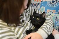 "Adult Female Cat - Domestic Short Hair: ""Molly"""
