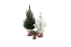 Lot de 2 petits sapins de Noël et 1 arbuste