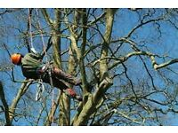 TREE SURGEON/Belfast and surrounding areas