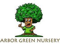 Nursery Practitioner Arbor Green nursery