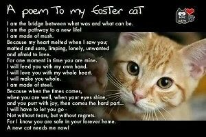 Loving Foster Homes Needed!