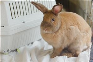 "Young Male Rabbit - Dutch: ""Orion*watch My Video*"""