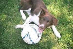 Dog Walker-- Dog Walking/Pet Sitting Available