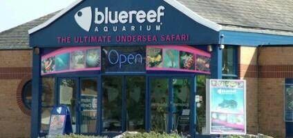 Blue Reef Aquarium Portsmouth Family Ticket
