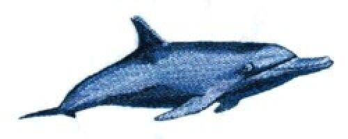 Embroidered Sweatshirt - Bottlenose Dolphin BT3906 Sizes S - XXL