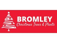 Christmas trees, free delivery Bromley