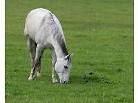 grazing for horses aberdare