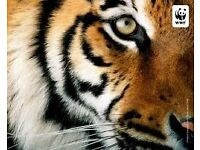 Urgent!!! Up to £12ph PLUS Daily REWARDS - Save the Planet! Street Fundraisers for WWF (CH)
