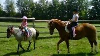 Summer Horse Camp for Kids @ Apple Ridge Farm