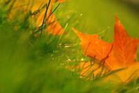 Maples Lawns & Yard Maintenance