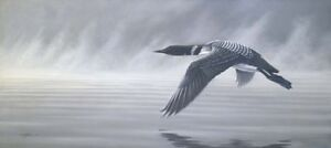 Misty Flight - Loon  by Wilhelm Goebel Print framed