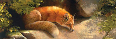 The Modest Fox