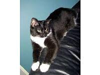 free black and white female cat