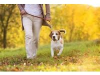 Dog walker in Bramdean and surrounding villages - Alresford & Ropley