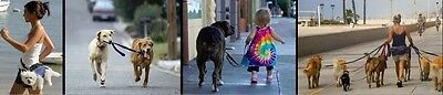 dogwalkindowntown