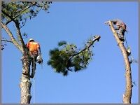 Tree Surgeon, landscape Gardner & removal service