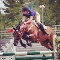 Pension pour chevaux disponible a sutton!!