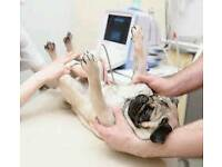 Mobile canine ultrasound scanning £25