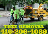 Tree removal stump removal branch trimming.