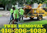 Affordable same day small tree shrubs and stump removal.