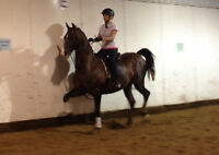 Horseback Riding Lessons..Fun way to get in shape!