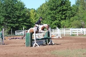 Mare for sale (ready to show)