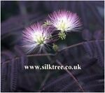 Silk Tree Nurseries