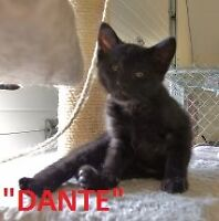 HANNA S.P.C.A. - LOTS & LOTS OF ADOPTABLE KITTENS/CATS