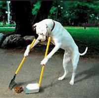 Ramassage de cacas de chien