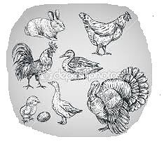 Chickens, Ducks, Rabbits, Turkeys, Geese etc