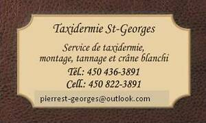 Taxidermiste  St-Georges