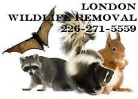 AFFORDABLE Wildlife Removal in London Squirrel and Raccoon