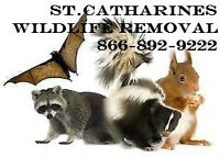 AFFORDABLE WILDLIFE CONTROL - Baby Raccoon & Squirrel Removal