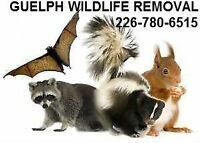 AFFORDABLE Wildlife Removal Squirrel and Raccoon Pest Control