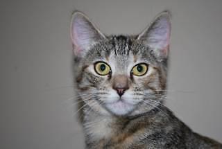 Litte Paws Kitten Rescue - Sasha Greenbank Logan Area Preview