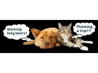 Need a pet sitter for the day or night? Need a dog trainer? Need extra pet sitting support?