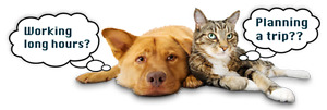 Affordable experienced pet sitter available