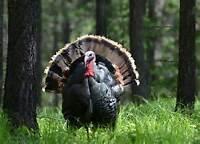Wild Turkey Seminar - London