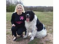 Home Boarding, Pet Sitting, Dog Walking, Pet Visits,... 9816 views to date!! Wolverhampton