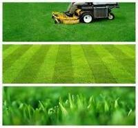 Lawn Care / Spring Cleanups
