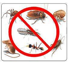 FROM $90, QUALITY PEST CONTROL SERVICES Liverpool Liverpool Area Preview