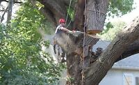 Best rate tree removal service for all your tree needs