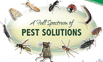 No1 Pest control Solutions At Unbeatable Price