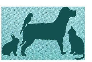 Pet visiting service (all animals) Kew Boroondara Area Preview