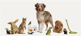 Barks & Breaks, Pet sitting & dog walking services