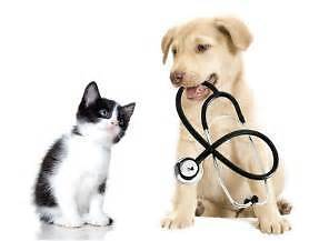 Yourpetscombined.com.au business directory Brisbane City Brisbane North West Preview