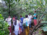 Rainforest conservation in the Western Ghats, India