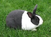 Looking for a Free Female Bunny Rabbit